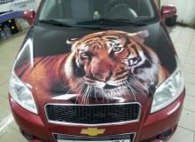 Полноцветный тигр на капот Chevrolet Aveo